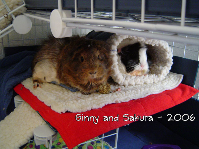 Ginny and Sakura share a Super Mat Bed