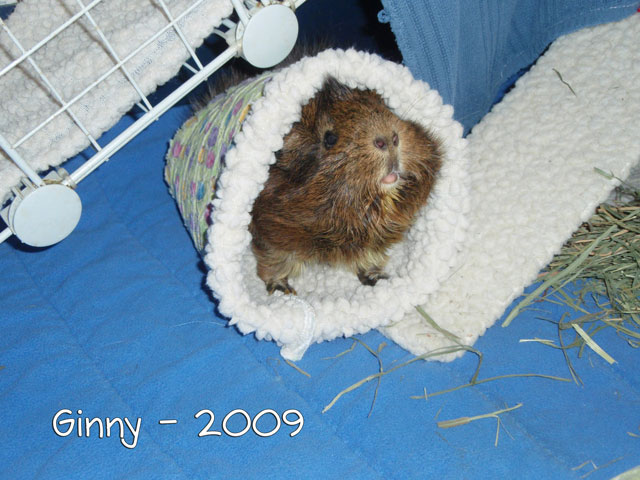 Ginny stretches and plays inside a tunnel.
