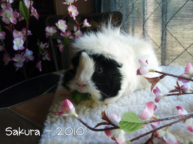 Sakura poses for her portrait on a Super Mat Bed.