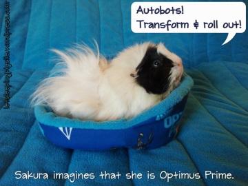 Sakura pretends to be Optimus Prime in her new Transformers cozy bed, by LetSleepingPigsLie