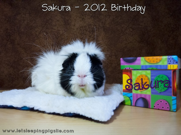 Sakura celebrates her 6th birthday with a new Super Mat Bed