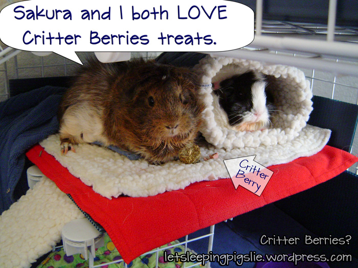 Ginny and Sakura love Critter Berries.