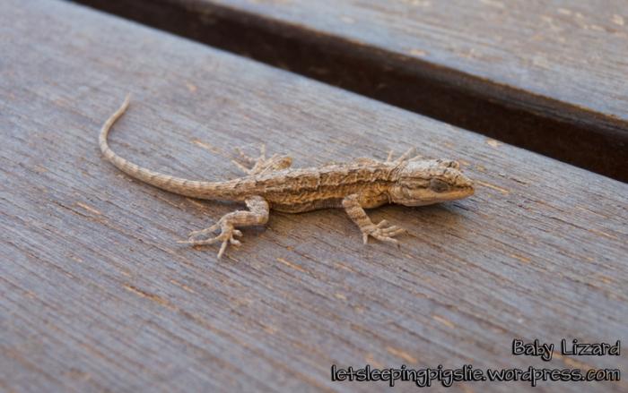 Rescued Baby Lizard, by LetSleepingPigsLie