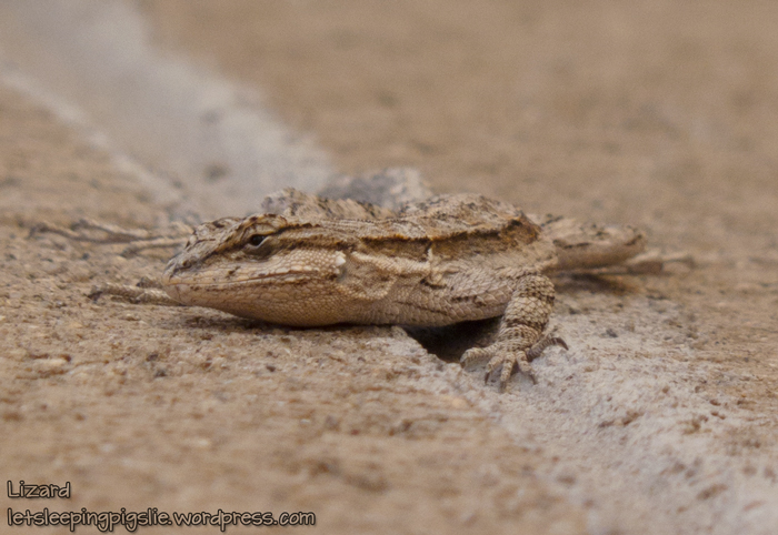 Lizard poses very snakelike, by LetSleepingPigsLie