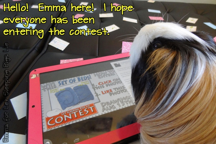 Emma enters the contest on her tablet.