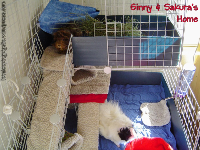 A picture of Ginny & Sakura's C&C Cage, by LetSleepingPigsLie