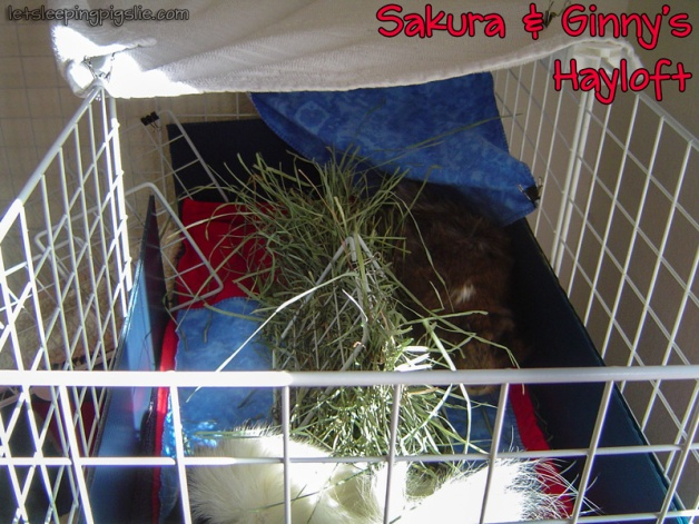 Sakura & Ginny enjoy their hayloft