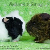 Sakura & Ginny, Together Again