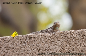 Ornate Tree Lizard with Palo Verde Flower, by LetSleepingPigsLie