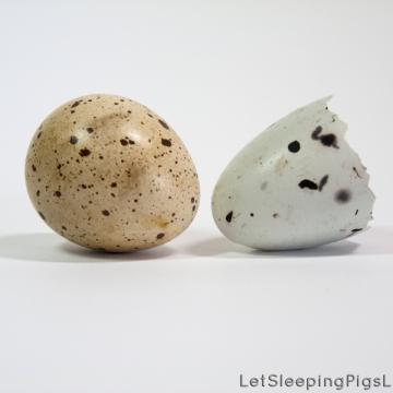 Abandoned quail's egg (L); unidentified eggshell (R); by LetSleepingPigsLie