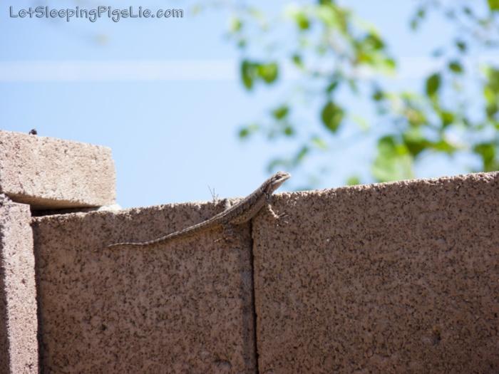 Ornate tree lizard just hanging around, by LetSleepingPigsLie