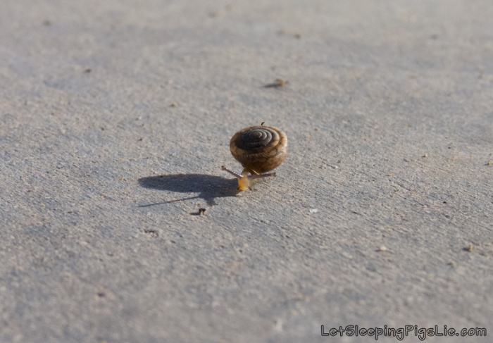 Tiny Snail Shadow, by LetSleepingPigsLie
