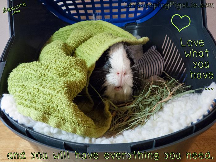 Sakura in her carrier, by Let Sleeping Pigs Lie