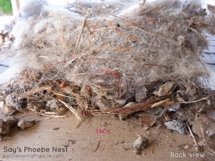 Say's Phoebe Nest, by LetSleepingPigsLie